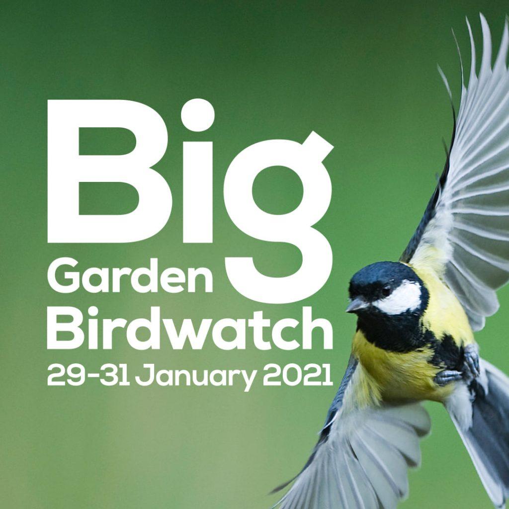 2021 RSPB Big Garden Birdwatch